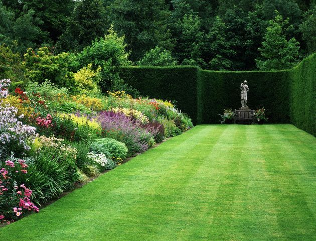 A colorful herbaceous border backed by a hedge of clipped yew, in the gardens at Bradenham Hall, near Swaffham in Norfolk, owned by Colonel and Mrs. Richard Allhusen. Mauve bellflowers (), catmint ( Six Hills Giant) and goldenrod ( Lemora) are among the blooming perennials. ca. 1989 Bradenham Hall, Bradenham, Swaffham, Norfolk, England, UK